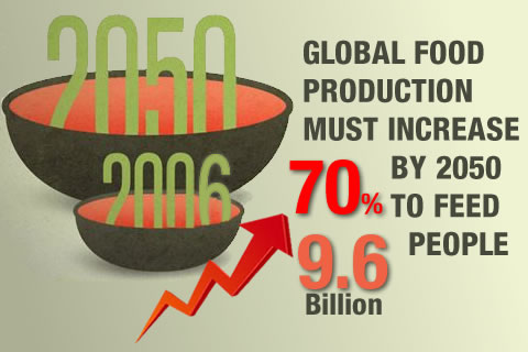 Meet Food Demand by Increase Productivity and Quality